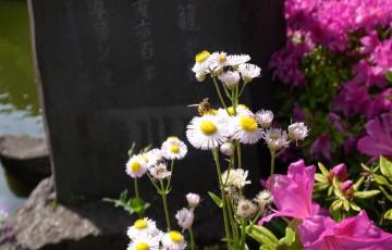0768-201505_Photo