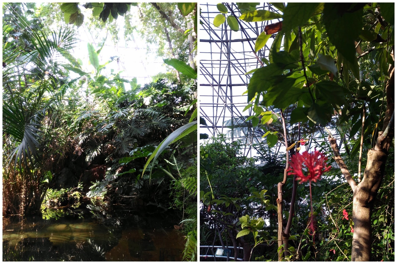 0979-201508_Yumenoshima Tropical Greenhouse Dome 06