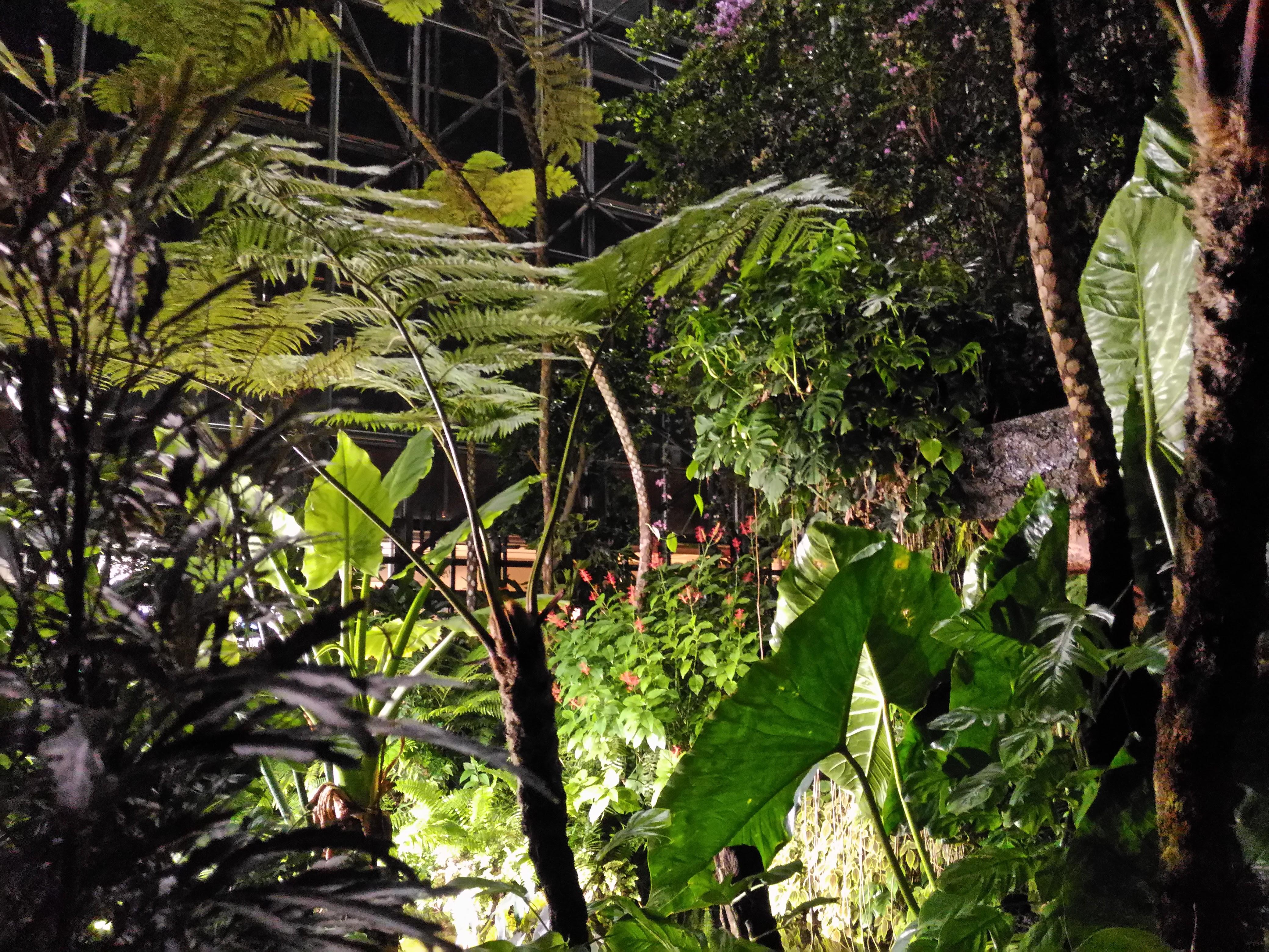 0980-201508_Yumenoshima Tropical Greenhouse Dome 09